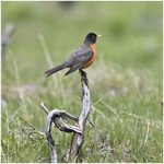 The Robins Are Back: Are Your Allergies, Too?