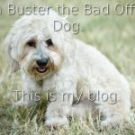 Buster, the Bad Office Dog: What's in a name?