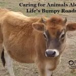 Caring for Animals Along Life's Bumpy Roads