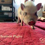 Eleanor Pigby