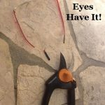Emergency Remedy Series: The Eyes Have It!