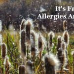 It's Fall. Allergies Are Back!